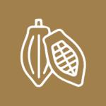 Taller Sueños de Cacao