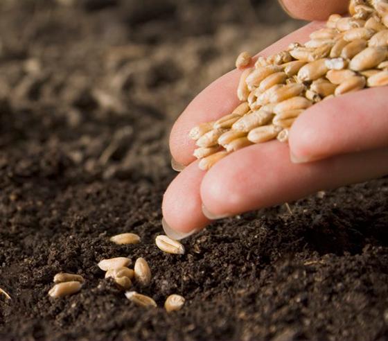 Huertos familiares semillas