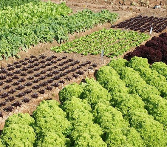Huertos familiares rotacion de cultivos